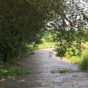 Ciudadanos Cs insta al Ayuntamiento de Ames a que realice las labores de limpieza en el paseo fluvial de Bertamiráns